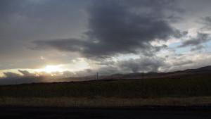 Endless sunflower fields - - - - - Végtelen napraforgómezők napnyugtakor.